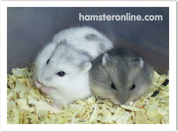 hamster-content-08