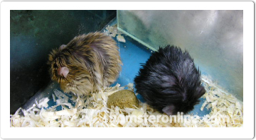 hamster-content-11