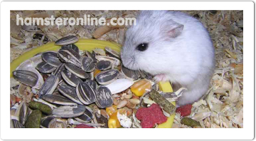 hamster-content-12