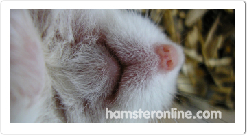 hamster-content-47
