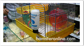 hamster-content-56